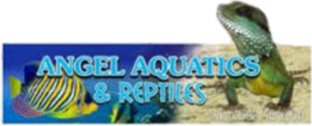 angel aquatics logo